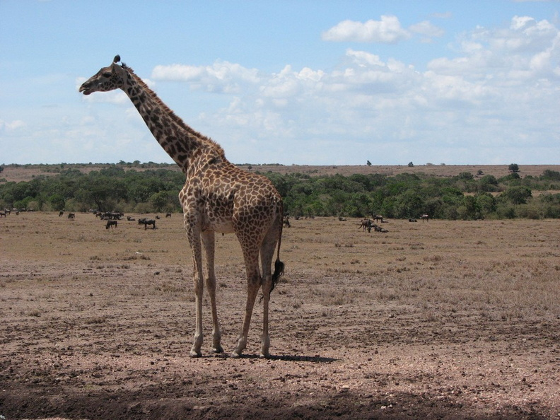 KENYA_SAFARI----0050.JPG