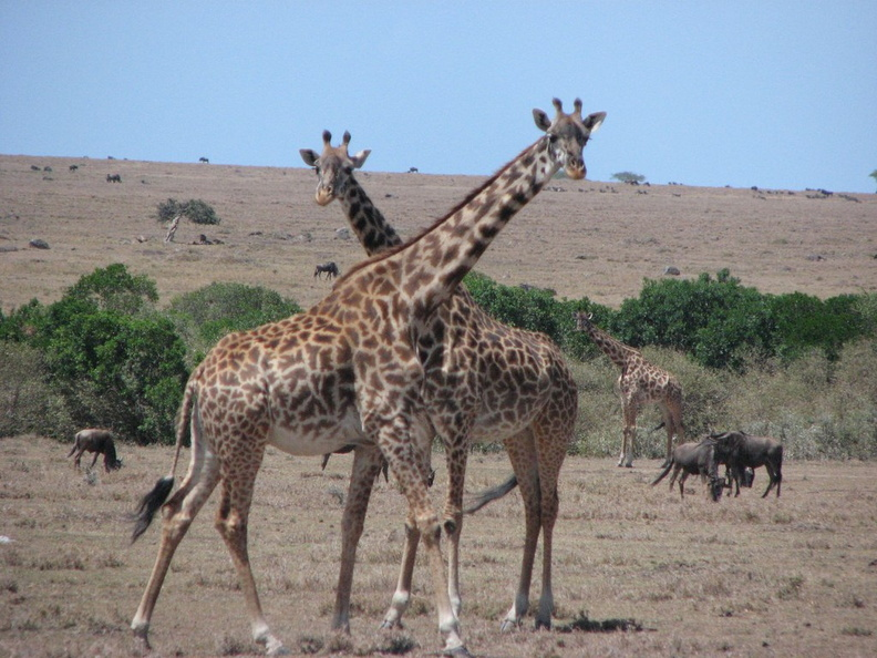 KENYA_SAFARI----0059.JPG